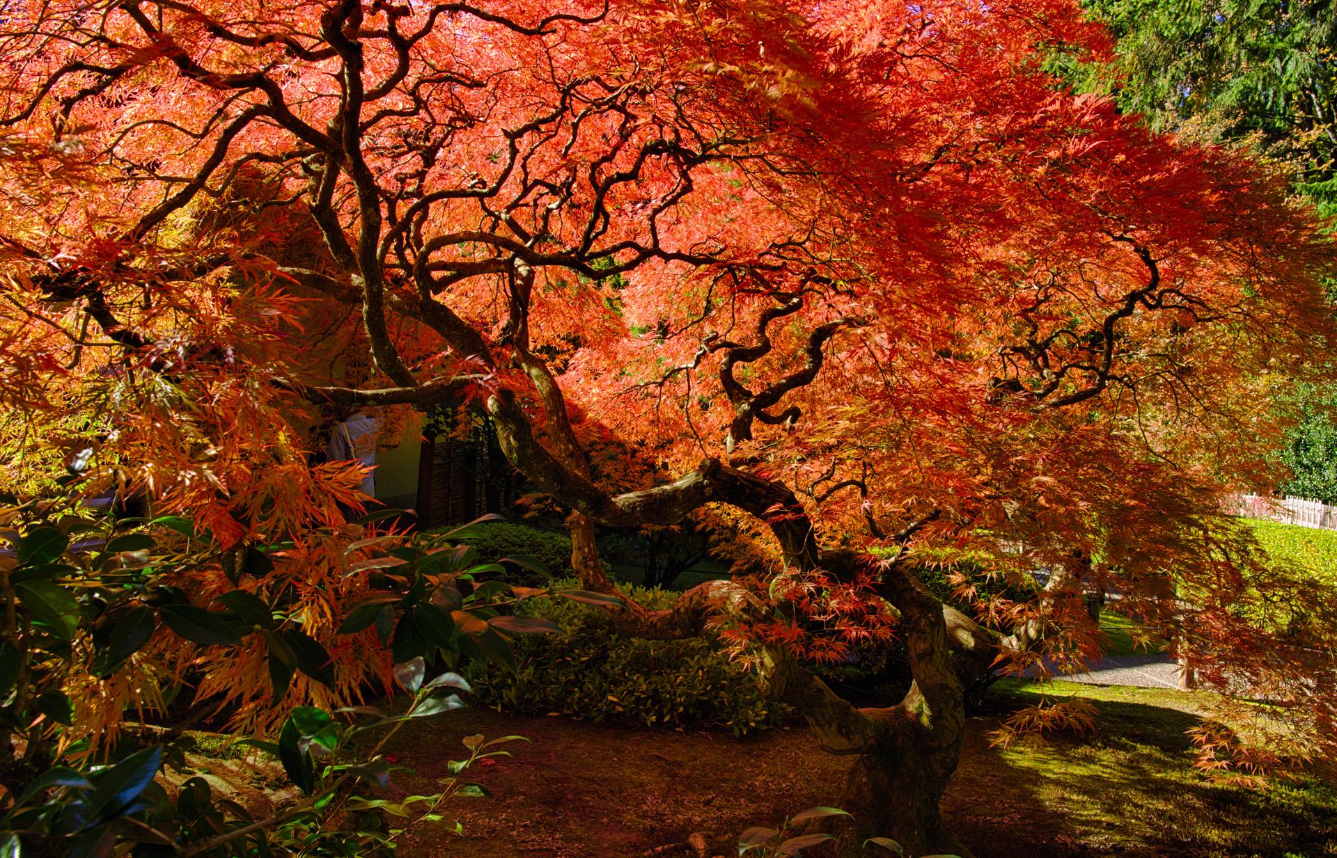 Bruce Clark, Colors - Portland Japanese Garden