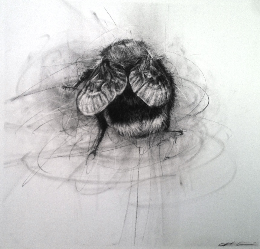April Coppini, Tree Bumble Bee, Charcoal