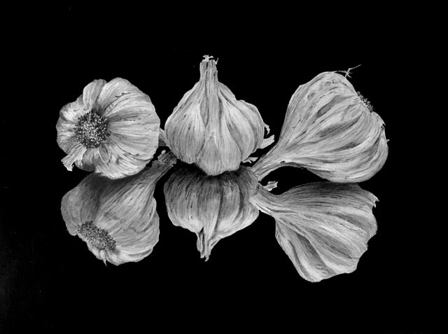 Donna Graham, Garlic Trio, graphite