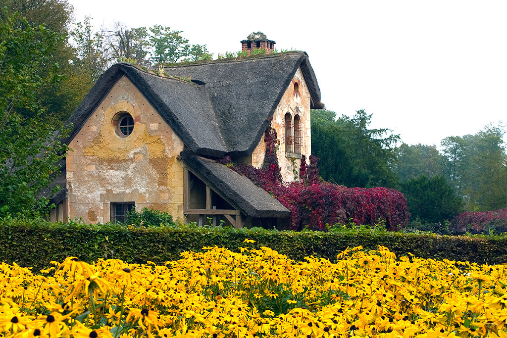 Patricia Heimerl, Versailles Village Black-eyed, Susans, photography