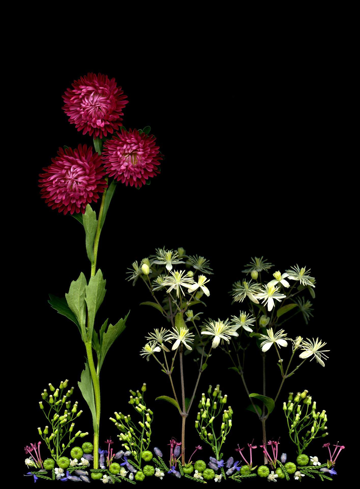 Fretta Cravens, Flower Landscape #22