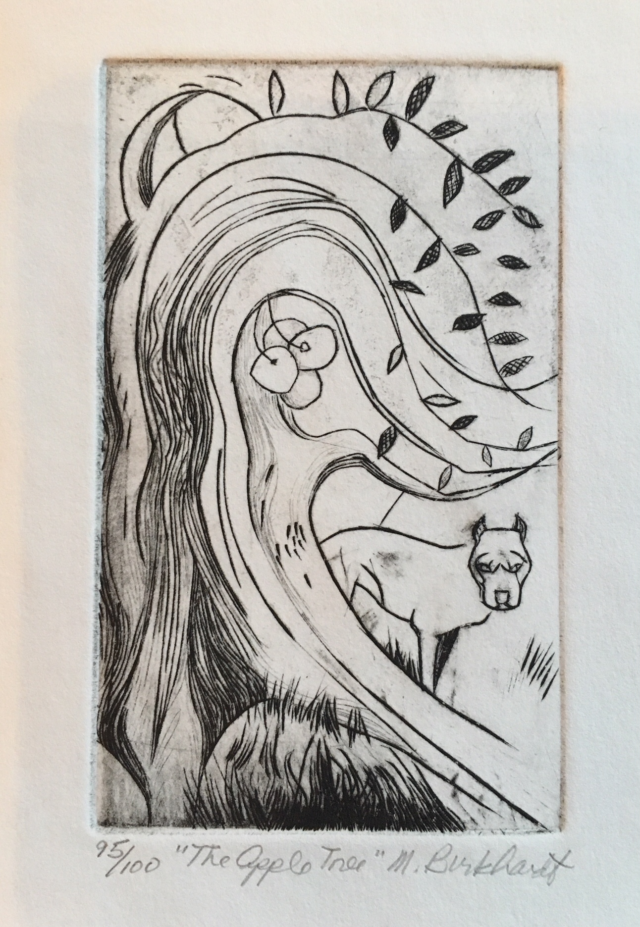 Marilyn Burkhardt, The Apple Tree, engraving