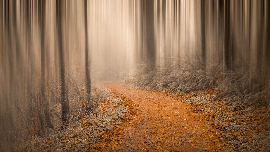 Don Schwartz, Path Through the Misty Woods, photography