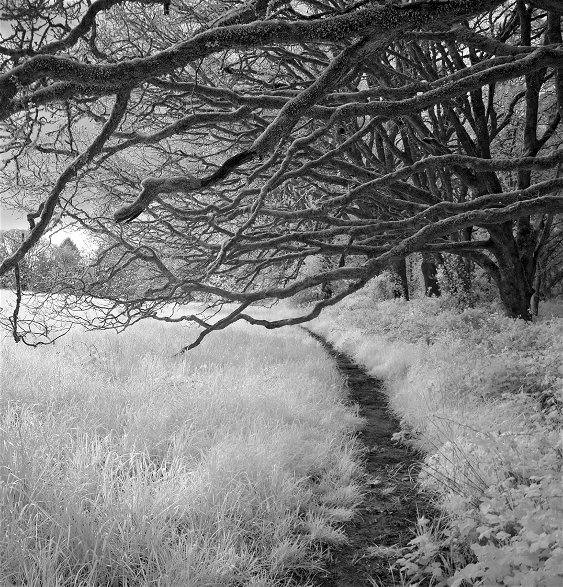 black and white photograph of path cutting through field under tree branches