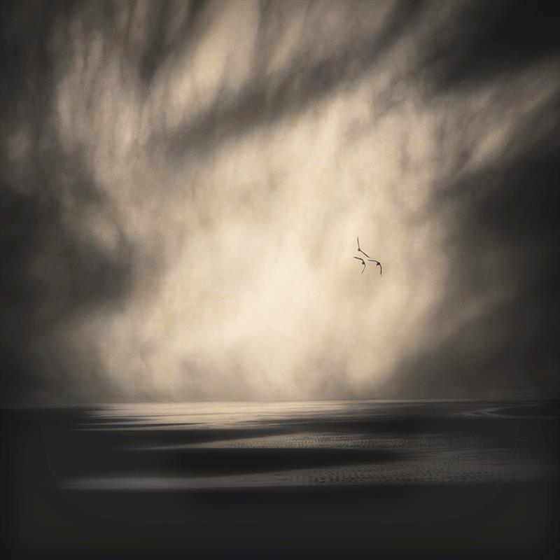 Gloria Baker Feinstein, Three Seagulls, photography