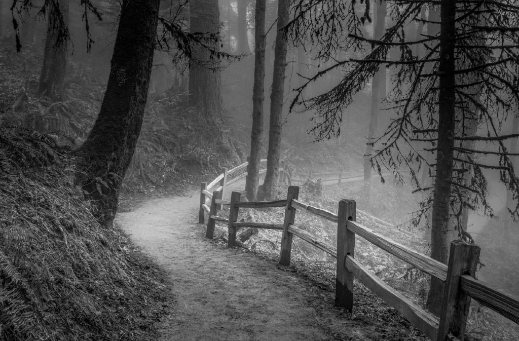 Don Schwartz, Winding Path Misty Forest, digital photo