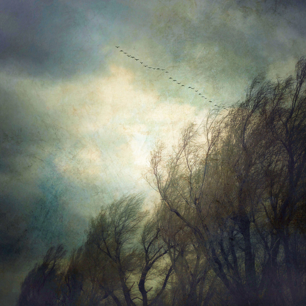 Gloria Baker Feinstein, Trees and Snow Geese, digital photo